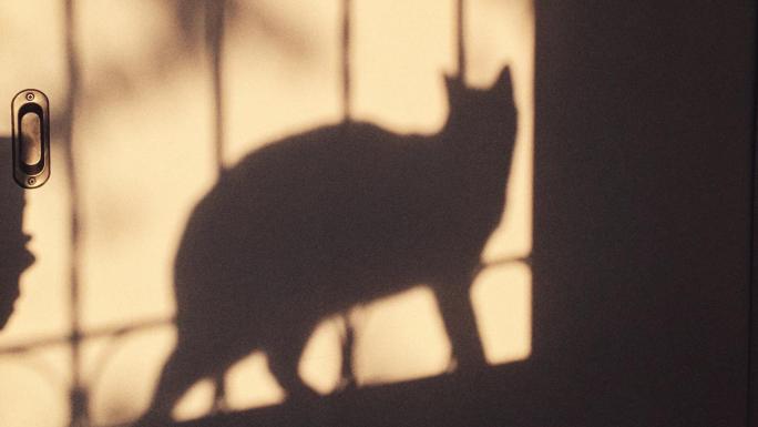 La historia de cómo abandoné a mi gato